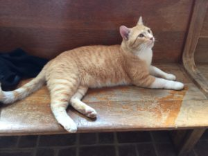 Noah, a distillery cat at Willett in Bardstown